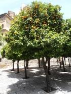 naranjos calle